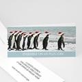 Pingouins - 1