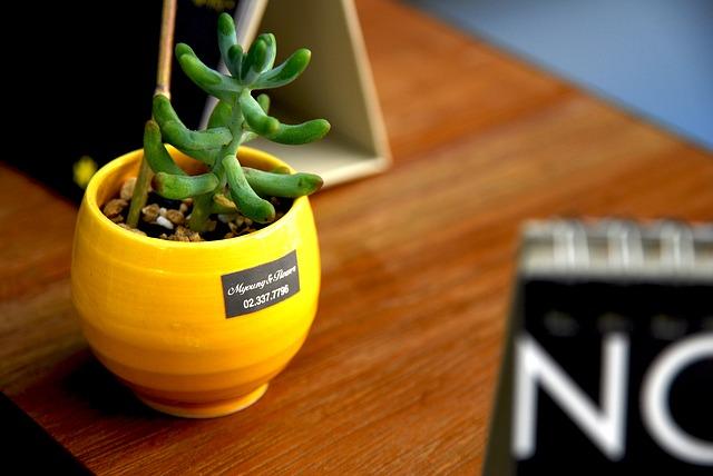 cadeau plante decorative