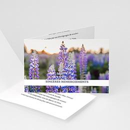 Fleurs violettes - 1