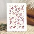 Faire-Part Naissance Frère et Soeur Herbier du Bonheur, Fleurs Parme, 15 x 21 cm