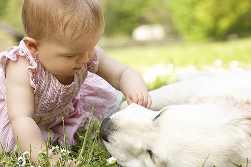 chien et bebe