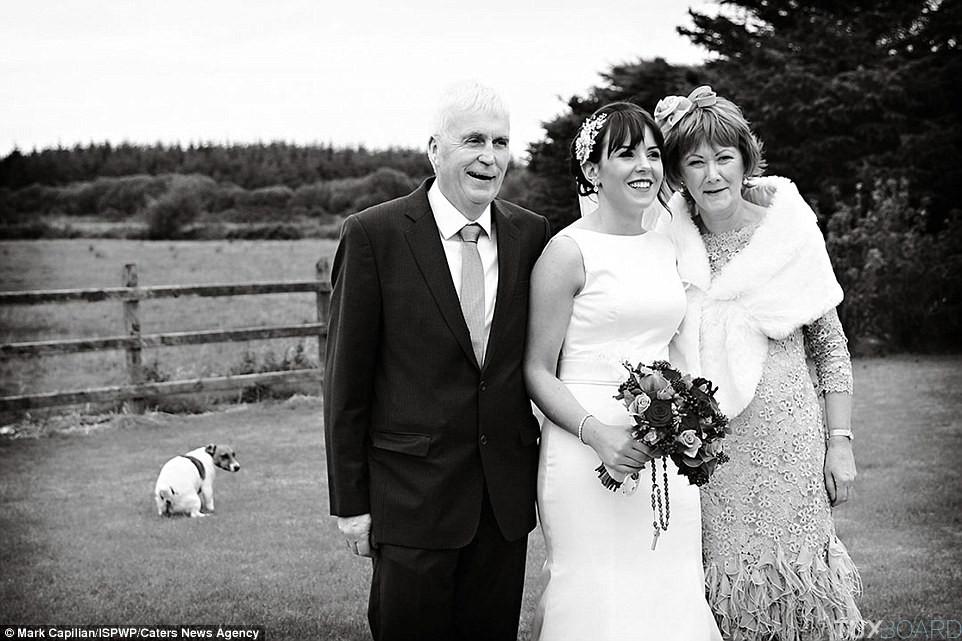 mariage chien